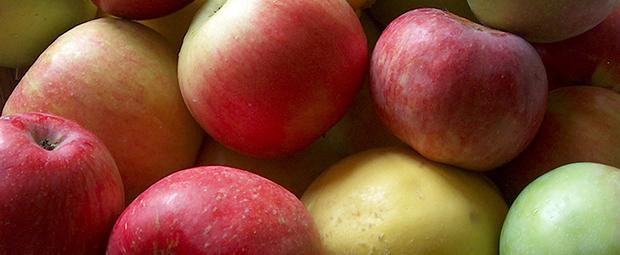 5délicieuses façons decuisiner lespommes